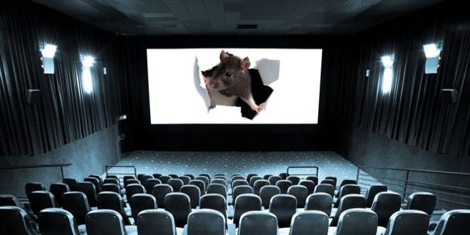Film Festivallerini Kimler Kemiriyor? 1 – empty cinema and white screen
