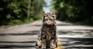 Unutmak İstemeseydik Gömmezdik Ölülerimizi: Pet Sematary (2019) 1 – 46579808795 d84cd2ebcc k