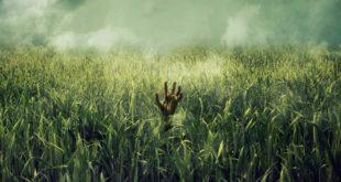 Bahçıvan Aranıyor: In the Tall Grass (2019) 6 – In the Tall Grass 04