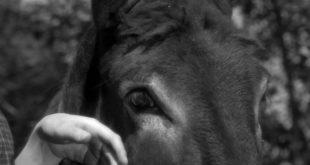 Burjuvazinin Eşeği Mesih'i Bekler mi? 7 – Au Hasard Balthazar 1966