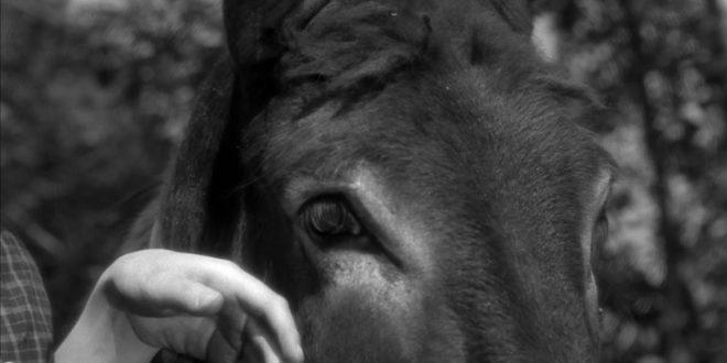 Burjuvazinin Eşeği Mesih'i Bekler mi? 1 – Au Hasard Balthazar 1966